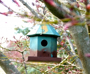 Blue Bird House (Photo by Emci)